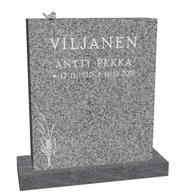 Hautakivi Viljantähkä 3 on väritykselttän Kurun harmaa. Nimitiedot ja koriste maalattu helmenharmaalla hautakiveen.